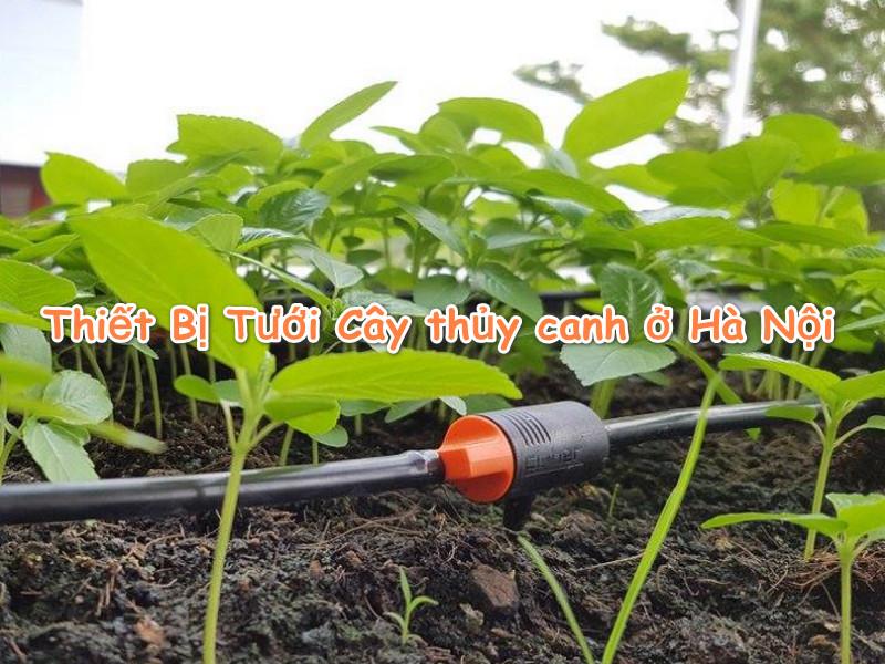 Tư vấn lắp đặt Thiết Bị Tưới Cây thủy canh ở Hà Nội