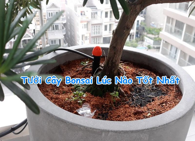 nen-tuoi-cay-bonsai-luc-nao-tot-nhat