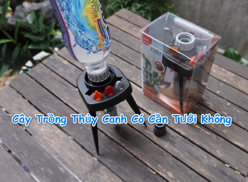 cay-trong-thuy-canh-co-can-tuoi-nuoc-khong