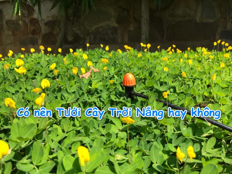 tuoi-cay-troi-nang