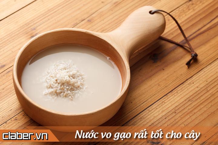tuoi-cay-voi-nuoc-vo-gao-sai-cach-khien-cay-cham-phat-trien-1