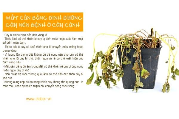 benh thuong gap o cay canh 1 Tổng hợp các loại bệnh thường gặp ở cây cảnh bạn nên biết để phòng tránh