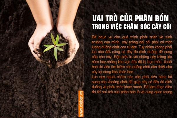 phan bon cay canh 1 Nên sử dụng loại phân bón nào để chăm sóc cho cây cối, cảnh quan?