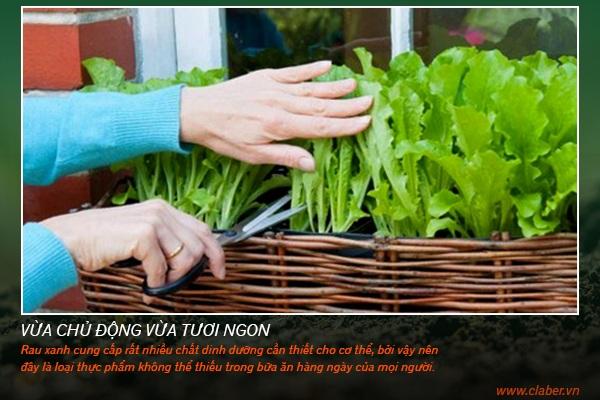 trong rau tai nha 1 Trồng rau tại nhà   vừa giải trí lại an toàn cho sức khỏe của mọi người