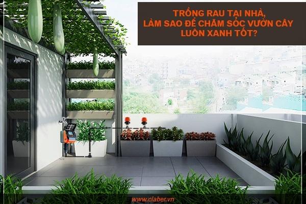 trong rau tai nha 3 Trồng rau tại nhà   vừa giải trí lại an toàn cho sức khỏe của mọi người