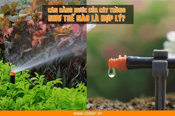 tuoi cay hop ly 1 Tưới cây hợp lý: nên giữ ổn định lượng nước hay thay đổi theo mùa?