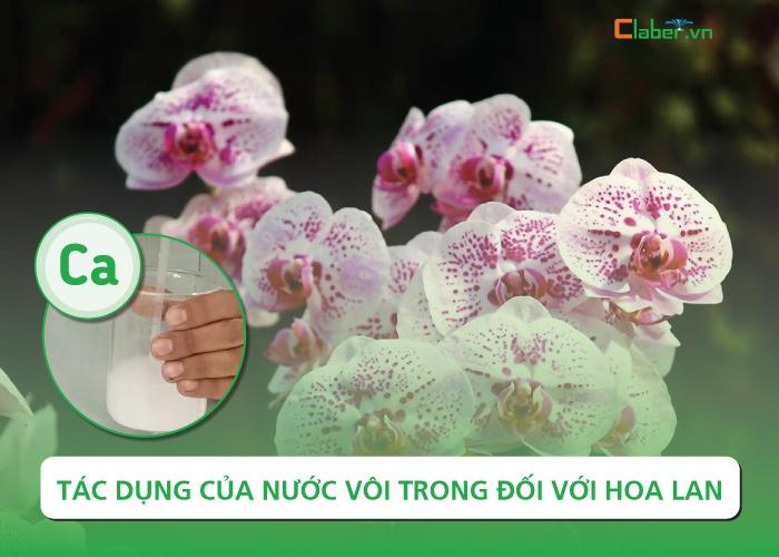 cách tưới nước vôi trong cho hoa lan