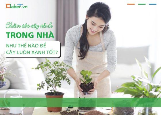Chăm sóc cây cảnh trong nhà