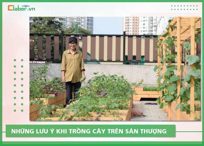 những loại cây dễ trồng trên sân thượng