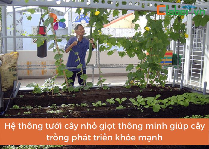 Hệ thống tưới cây nhỏ giọt thông minh giúp cây trồng phát triển khỏe mạnh và tăng năng suất